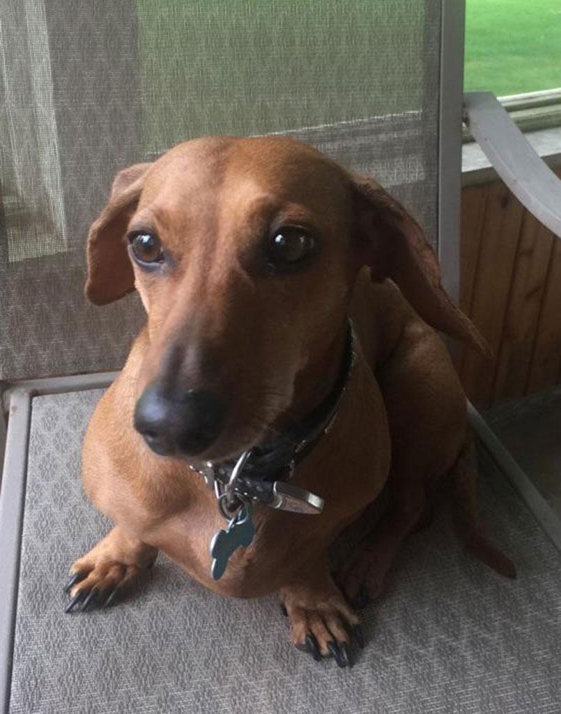 Wiener Dog Daisy