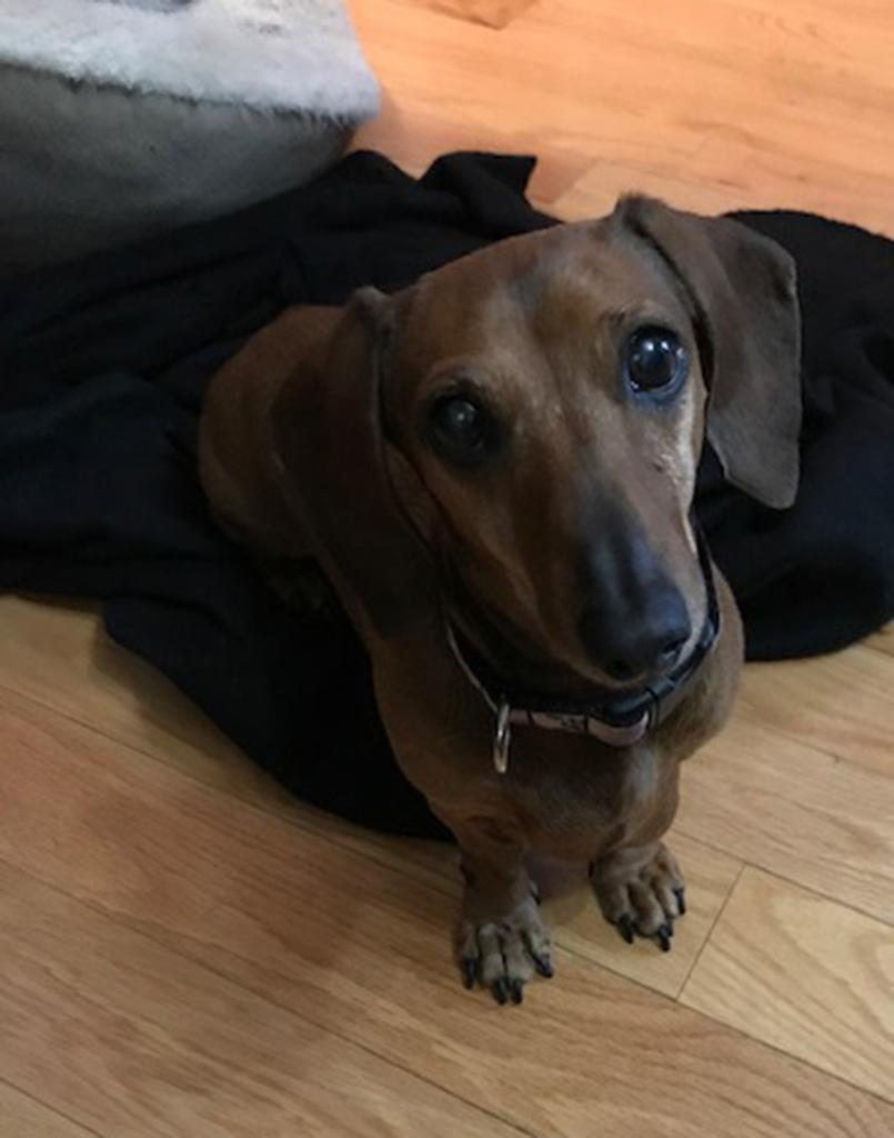 Wiener Dog Dalilah