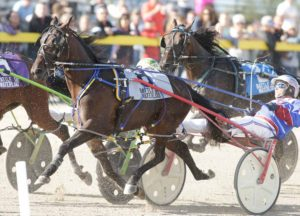 Racehorse_harness_racing