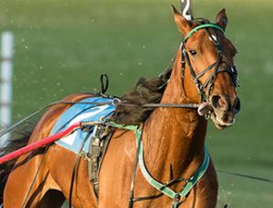 Past Events – Grand River Raceway